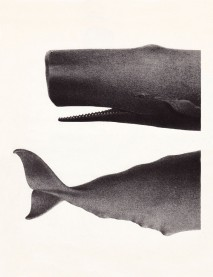 half_whale_1024x1024