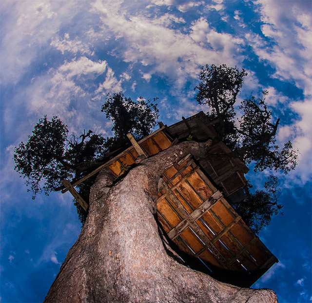 Swing over a cliff at casa del arbol design joy for Casa del arbol cuenca